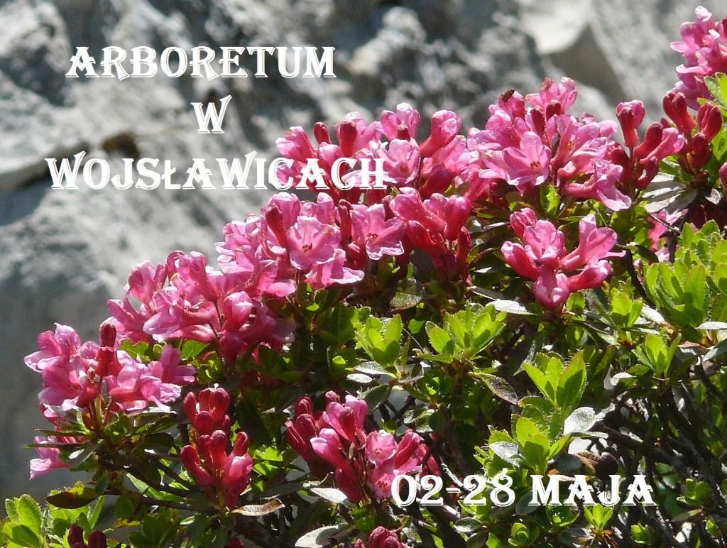 plakat Wojsławice